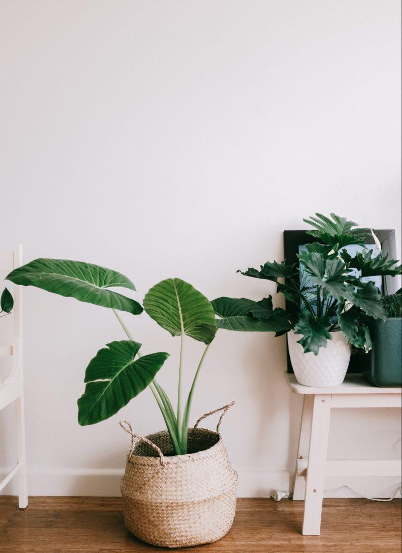 Styling Your Dorm Room |BOHO Room Decor Ideas